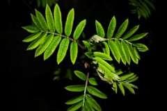 Надо ли выращивать растения «вверх ногами»?